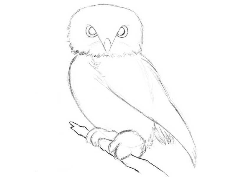 Легкие рисунки совы карандашом, картинки 01