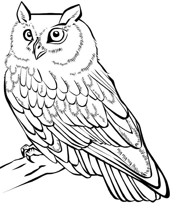 Легкие рисунки совы карандашом, картинки 02