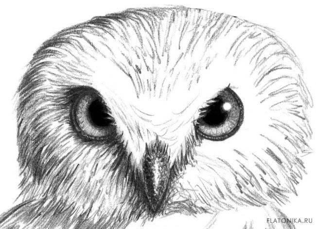 Легкие рисунки совы карандашом, картинки 05