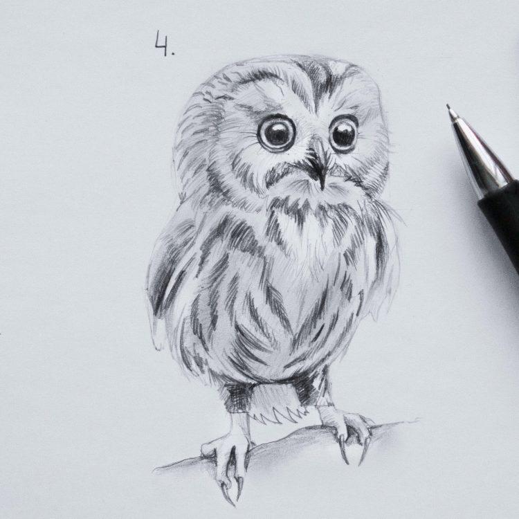 Легкие рисунки совы карандашом, картинки 09
