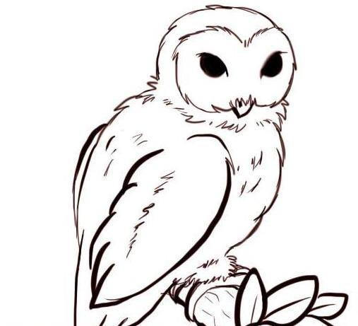 Легкие рисунки совы карандашом, картинки 14