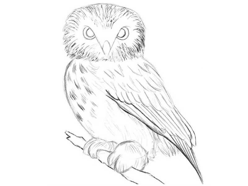 Легкие рисунки совы карандашом, картинки 16