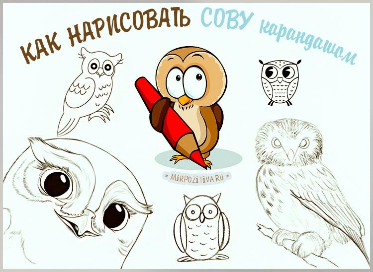 Легкие рисунки совы карандашом, картинки 18