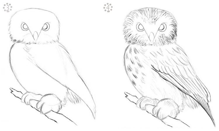 Легкие рисунки совы карандашом, картинки 22