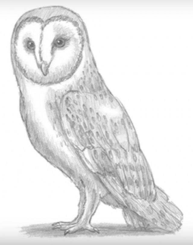 Легкие рисунки совы карандашом, картинки 23