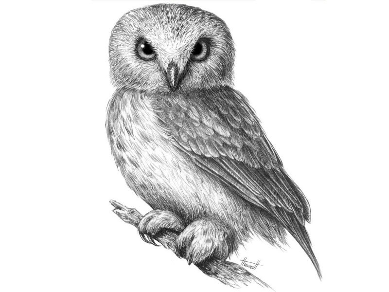 Легкие рисунки совы карандашом, картинки 24