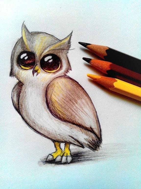 Простой цветной рисунок совы, картинки 01