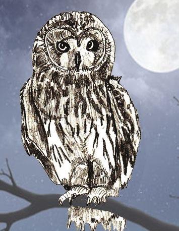 Простой цветной рисунок совы, картинки 06