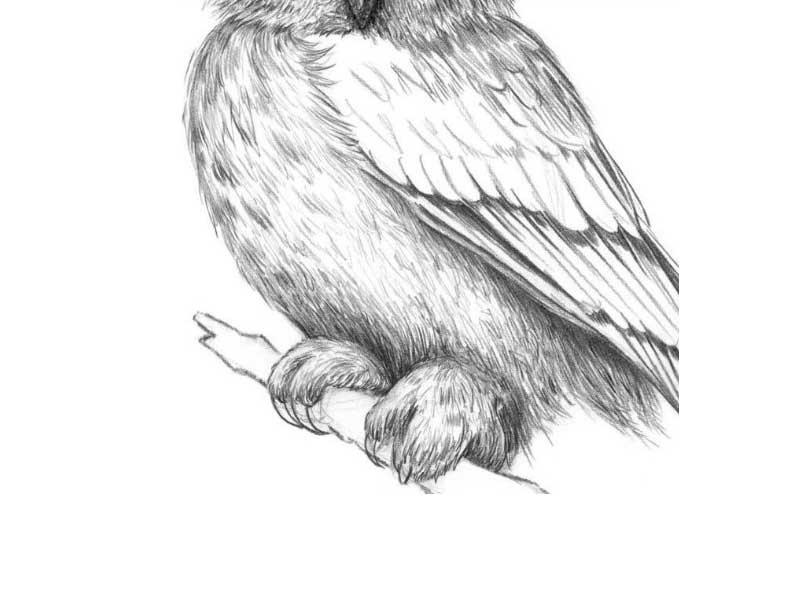 Простой цветной рисунок совы, картинки 07
