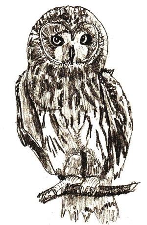 Простой цветной рисунок совы, картинки 09