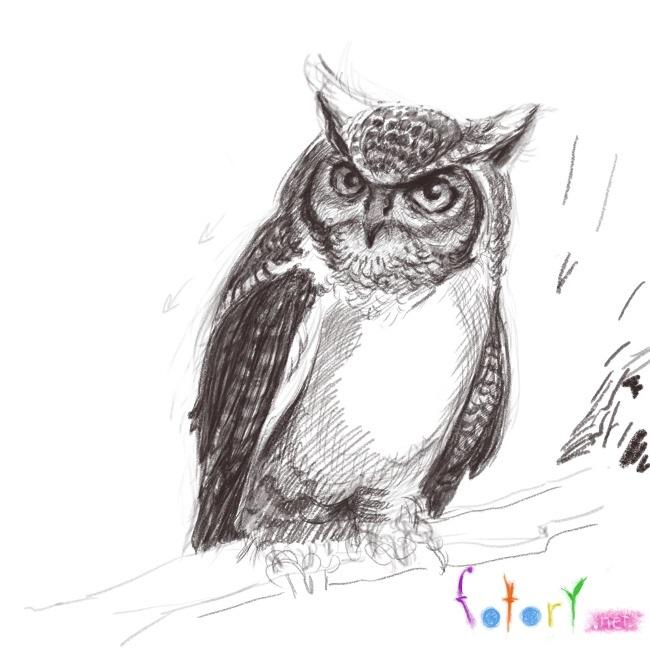 Простой цветной рисунок совы, картинки 10