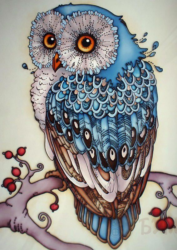 Простой цветной рисунок совы, картинки 14