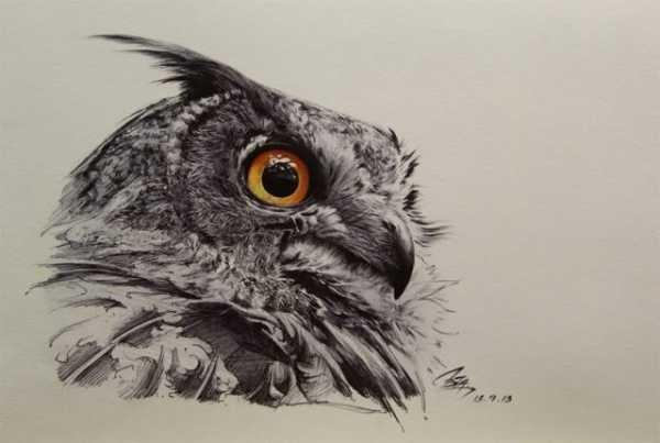 Простой цветной рисунок совы, картинки 15
