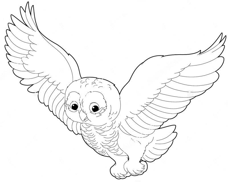 Простой цветной рисунок совы, картинки 17