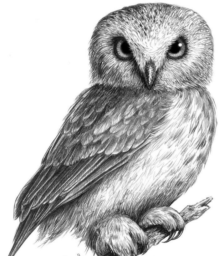 Простой цветной рисунок совы, картинки 18