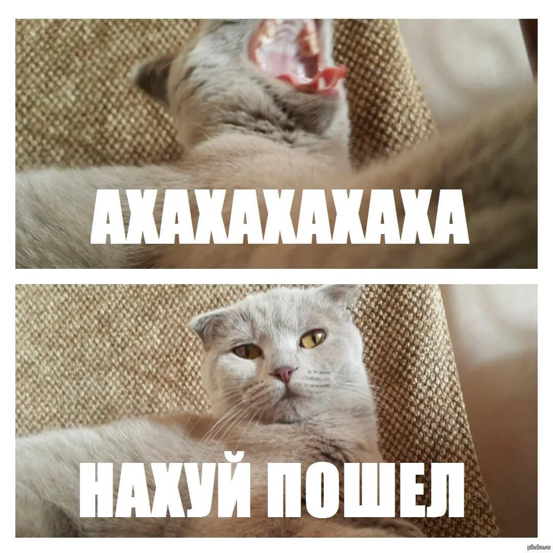 Топовые мемы на все случаи жизни 21