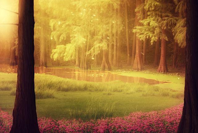 Красивый аниме фон лес 12