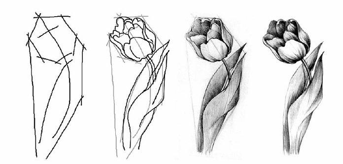 Пошагово рисунки для срисовки   подборочка (2)