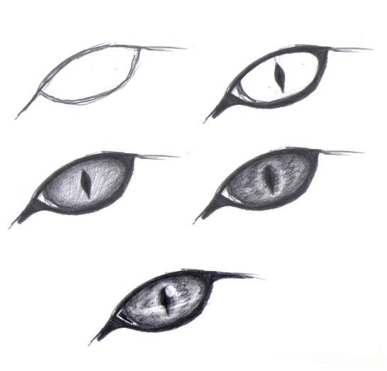 Пошагово рисунки для срисовки   подборочка (9)